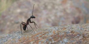 trucos-para-repeler-hormigas-del-hogar