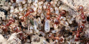 caracteristicas-hormigas