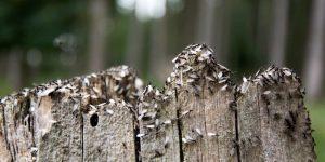 HORMIGAS CON ALAS » Características y hábitat